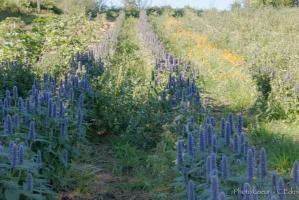 jardin de Bernadette, expo de Vincent Munier