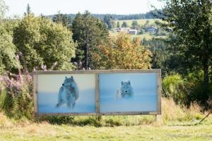 loups au jardin